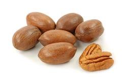 De noten van de pecannoot Stock Afbeeldingen