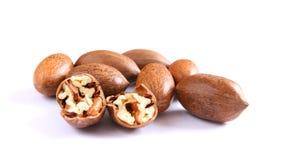De noten van de pecannoot op wit Royalty-vrije Stock Foto