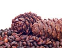De noten van de pijnboom Royalty-vrije Stock Foto's