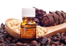 De noten van de pijnboom en fles essentiële olie Stock Foto