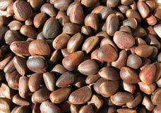 De noten van de pijnboom (zaden van Siberische pijnboom) Royalty-vrije Stock Fotografie