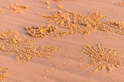 De noteringen van de strandkrab Royalty-vrije Stock Afbeeldingen