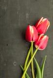 De nouveau aux fleurs d'école Photo libre de droits