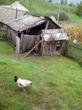 De nouveau aux fondements, en nature, grange de poulet Photographie stock libre de droits