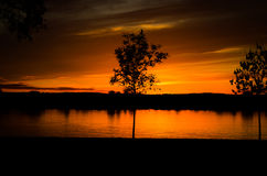 9 de novembro de 2013 - única árvore Fotos de Stock Royalty Free