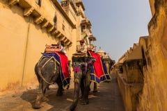 4 de novembro de 2014: Elefantes na entrada ao palácio ambarino Foto de Stock