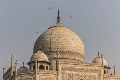 2 de noviembre de 2014: Tejado de Taj Mahal en Agra, la India Imagen de archivo libre de regalías