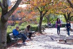 2015 - 11 de noviembre, parque de Tennoji en otoño Imagenes de archivo