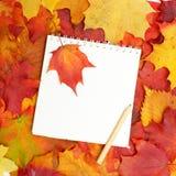 De nuevo a la escuela - otoño Foto de archivo