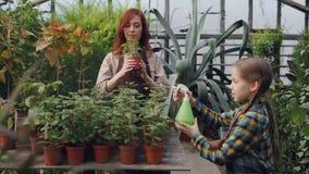 De nuttige dochter helpt haar mamma in serre die water op pottenbloemen gebruikend bestrooien nevelfles Landbouw stock footage