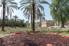 In de oase dichtbij Rustaq-Fort, Oman royalty-vrije stock foto