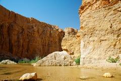 De oase Tamerza van de berg. stock afbeeldingen