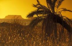 DE OASE VAN AFRIKA EGYPTE DE SAHARA SIWA Stock Foto