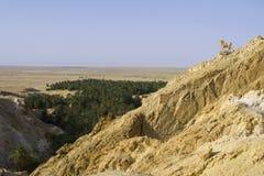 De Oase van Chebika - Tunesië Royalty-vrije Stock Foto