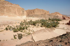 De oase van de woestijn Royalty-vrije Stock Foto's