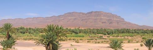 De oase van de woestijn Stock Foto