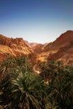De oase van de woestijn Stock Fotografie