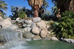 De oase van de Woestijn van de palm Stock Foto