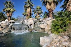 De oase van de Woestijn van de palm Stock Afbeeldingen