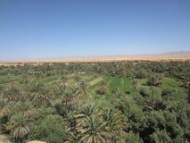 de oase van elrrachidia in Marokko stock afbeeldingen