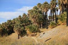De Oase van het Palm Springs Stock Afbeeldingen