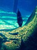 In de oceaan Royalty-vrije Stock Afbeelding