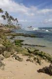 De oceaan en de palmen Stock Afbeeldingen