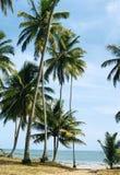 De oceaan van Brazilië, Maceio stock foto's