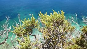 De oceaan van het installatieszeewater stock footage