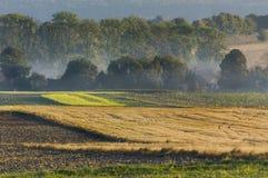 De ochtend in het platteland, misted gebieden stock afbeelding