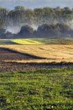 De ochtend in het platteland, misted verticale gebieden, royalty-vrije stock foto's
