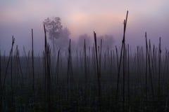 In de ochtend met mist Stock Afbeeldingen