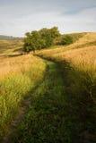 De ochtend van Aerly op de gebieden. Stock Foto
