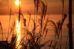 De ochtend van Burlington met zonsopgang Royalty-vrije Stock Foto