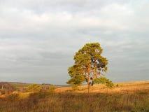 De ochtend van de herfst. stock afbeelding