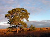 De ochtend van de herfst. royalty-vrije stock afbeelding