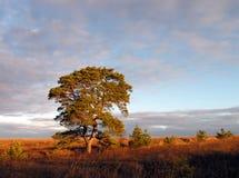 De ochtend van de herfst. stock afbeeldingen