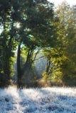 De ochtend van de herfst Stock Foto's