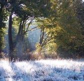 De ochtend van de herfst Royalty-vrije Stock Foto's