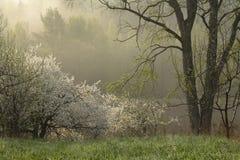 De ochtend van de lente royalty-vrije stock afbeeldingen