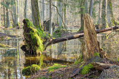 De ochtend van de lente in bos Stock Foto's