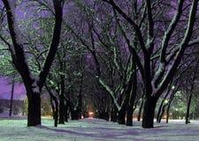 De ochtend van de winter Royalty-vrije Stock Afbeelding