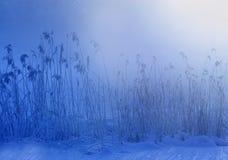 De ochtend van de winter Stock Afbeeldingen
