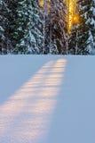De ochtend van de winter royalty-vrije stock foto