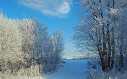 De ochtend van de winter Stock Afbeelding