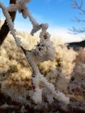 De ochtend van de winter Royalty-vrije Stock Afbeeldingen