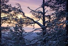 De ochtend van de winter/zonlicht en bomensilhouetten Royalty-vrije Stock Foto