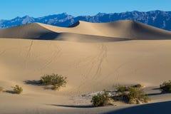 De ochtend van de doodsvallei bij de Vlakke het Zandduinen van Mesquite Stock Afbeelding