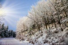De ochtend van het heldere en zonnenieuwjaar stock afbeeldingen