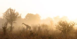 De Ochtend van Kruger Stock Afbeeldingen